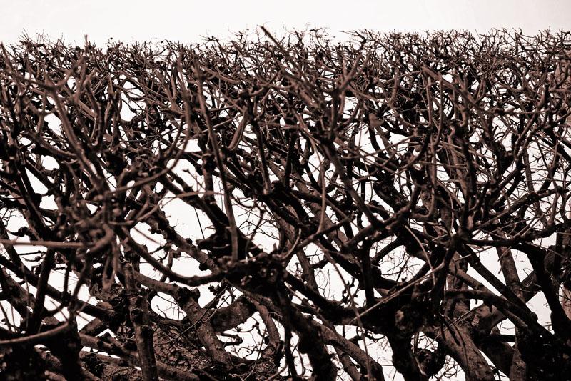 11. Fol'arbres