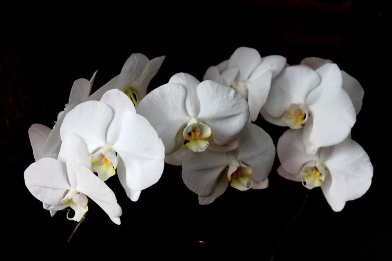 15. Fleurs de nuit