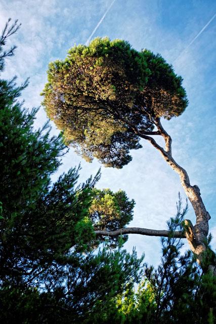 arbre-vent